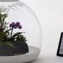 Biome-Flora-Terrarium