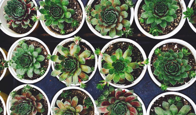 planten-potten