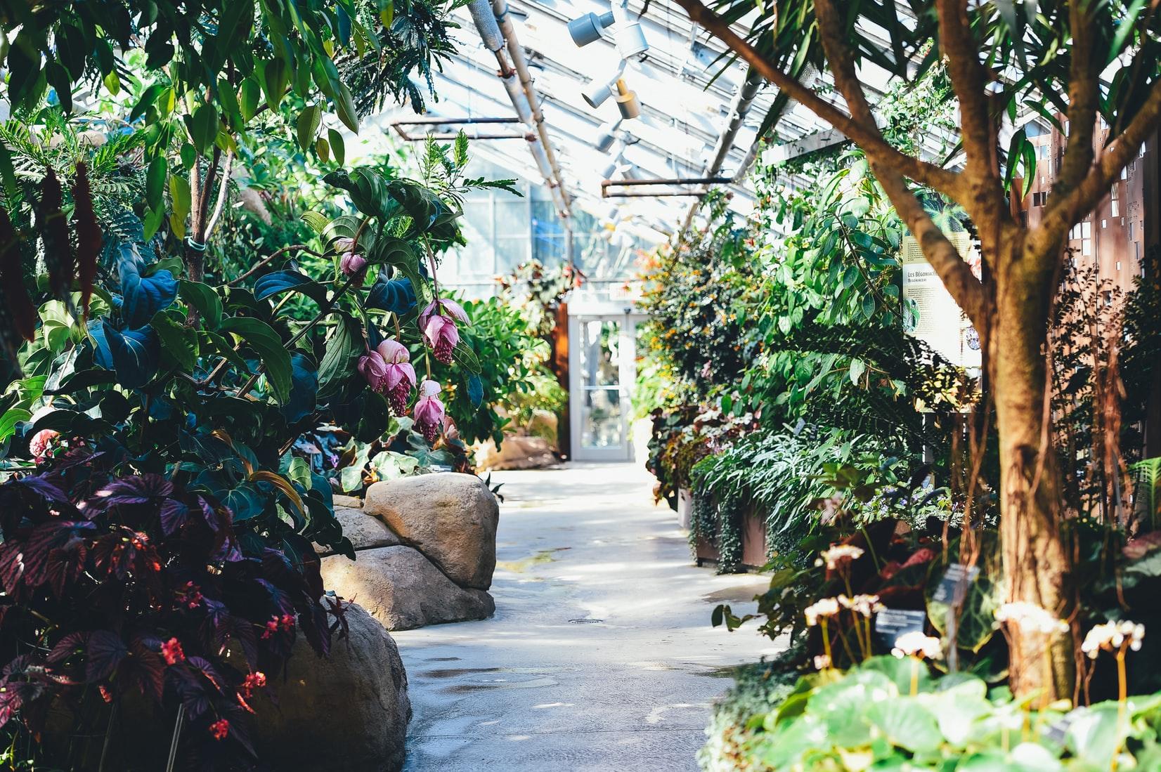 planten-tuin-kas