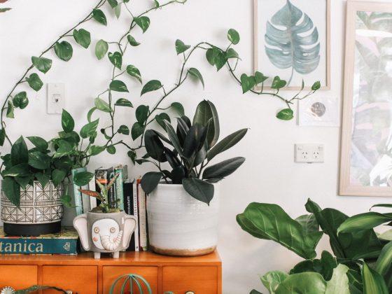 kamerplant-witte-pot
