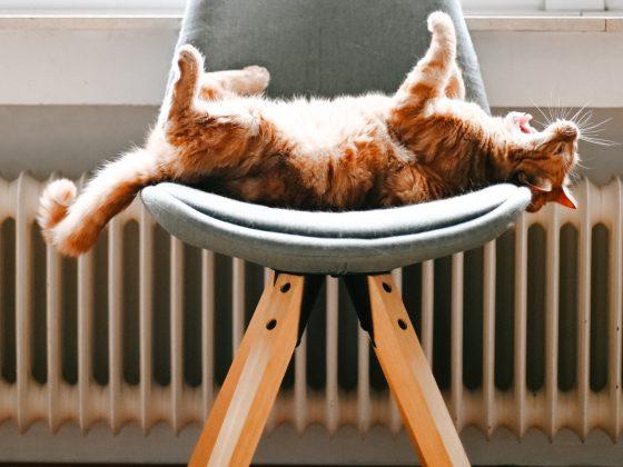 radiator-kat